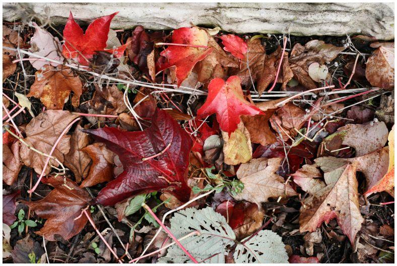 Photo Autumn