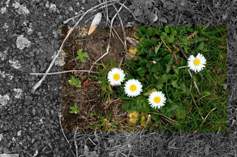 Pavement Flowers