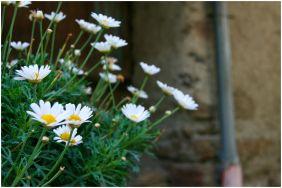 mountain_flowers