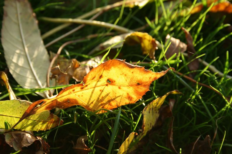 yellow leaf on green grass