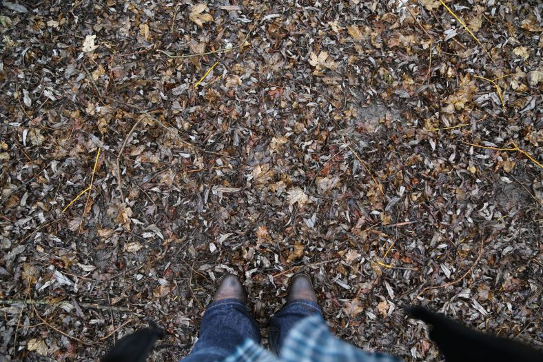 carpet of wet leaves