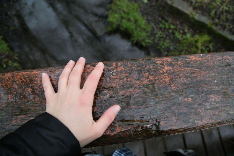 wet timber