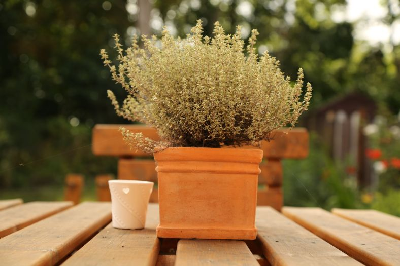 Thyme in Summer