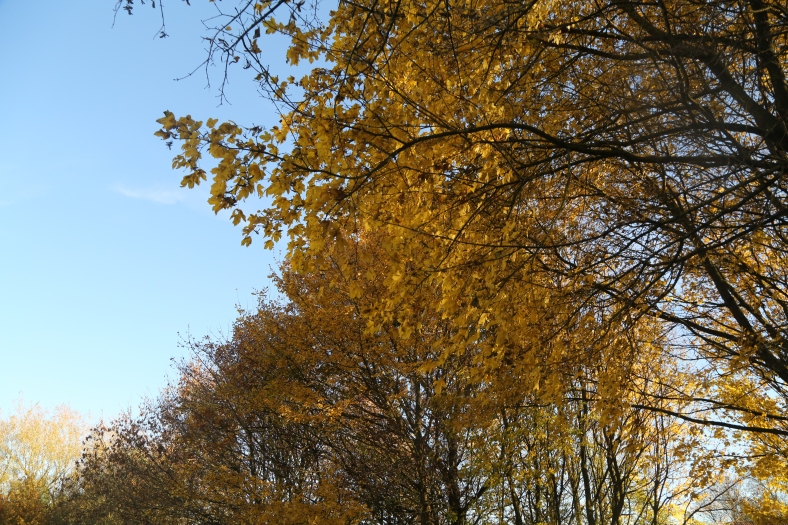 autumn-20162