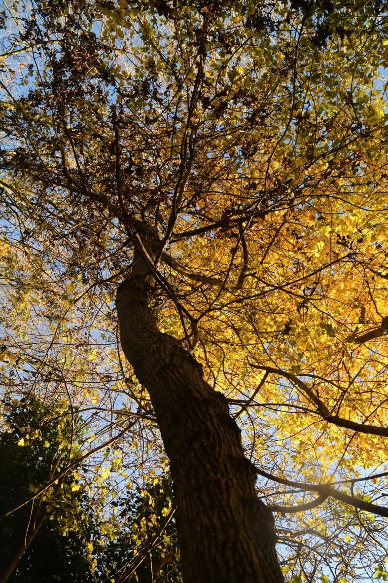 autumn-2016_3