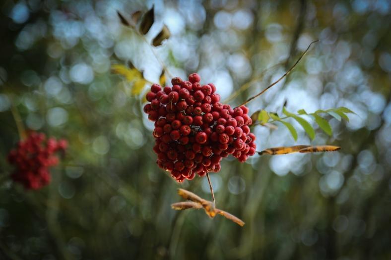 autumn (1 of 1)
